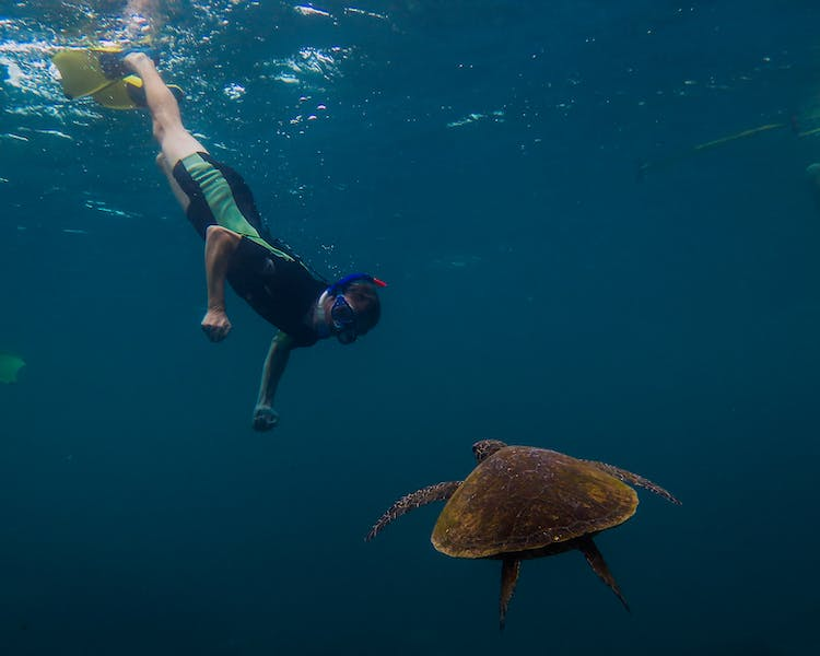 Warroora - Ningaloo Reef - Snorkelling with turtles.
