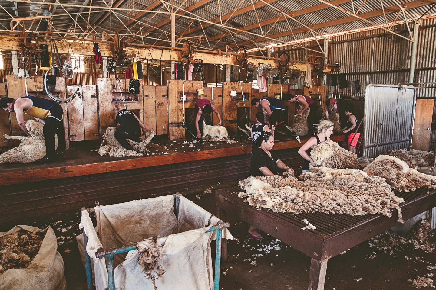 Warroora Last Shearing