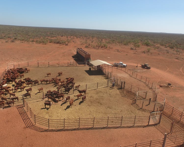 Warroora Cattle yard.
