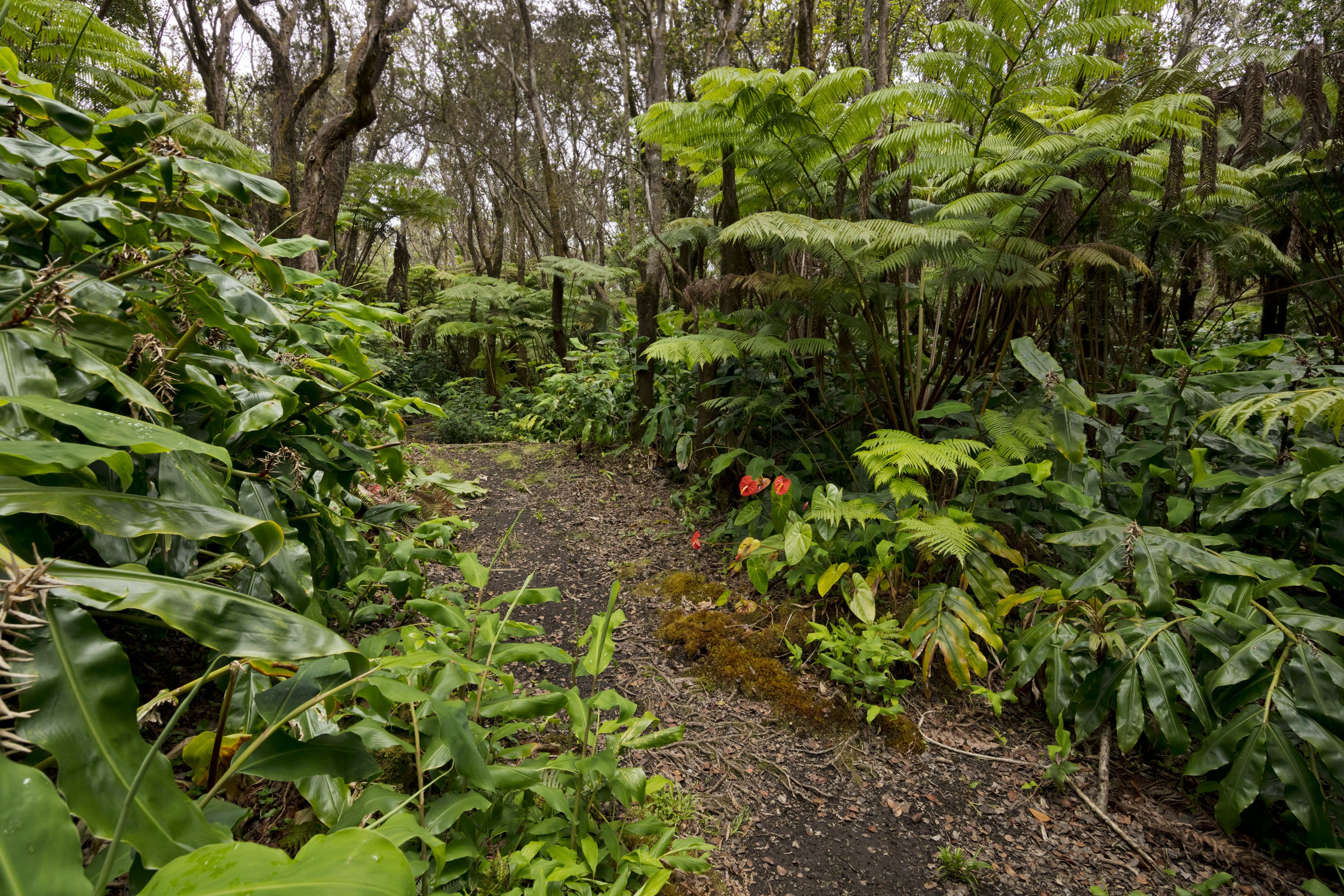 Rainforest Walk at Hale 'Ohu