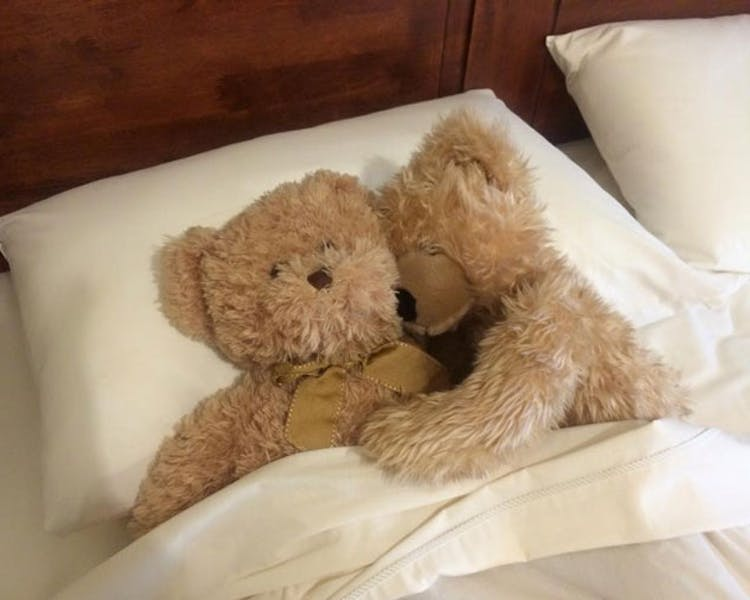 Admurraya House Rutherglen Accommodation Bears