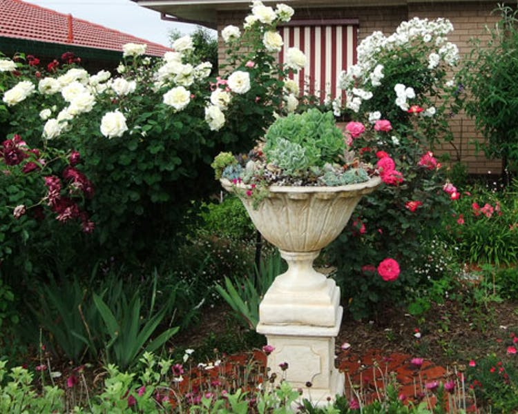 Admurraya House Rutherglen Accommodation Front Garden Urn