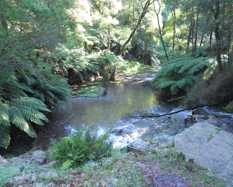 Tarra Bulga National Park 2