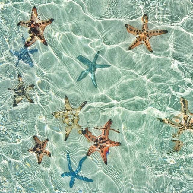 Starfish at the Sandbar