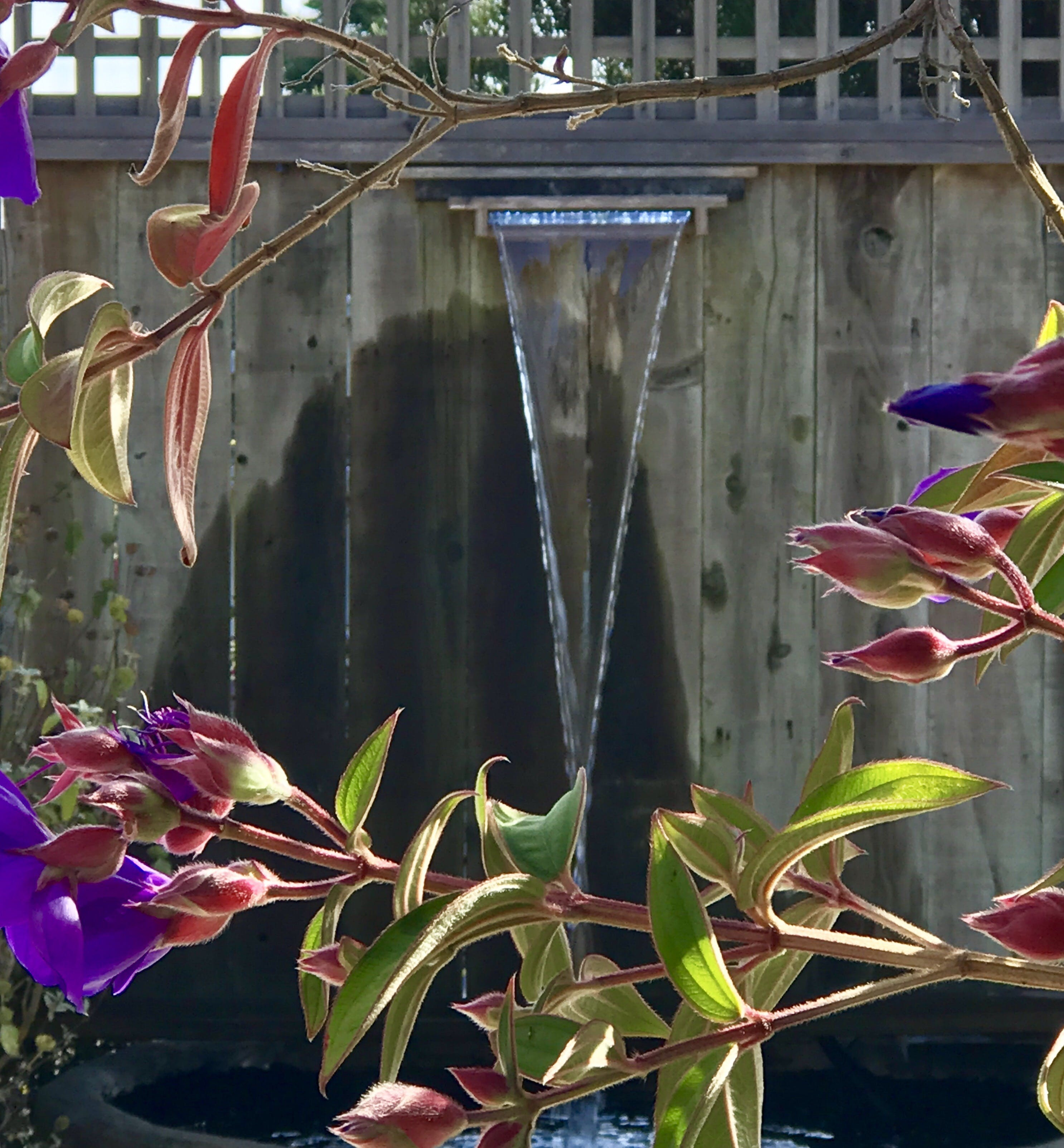 waterfall, purple flowers, koi fountain, bodega bay inn