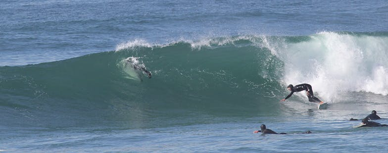 Surfing, salmon creek, bodega bay inn. surfing seal