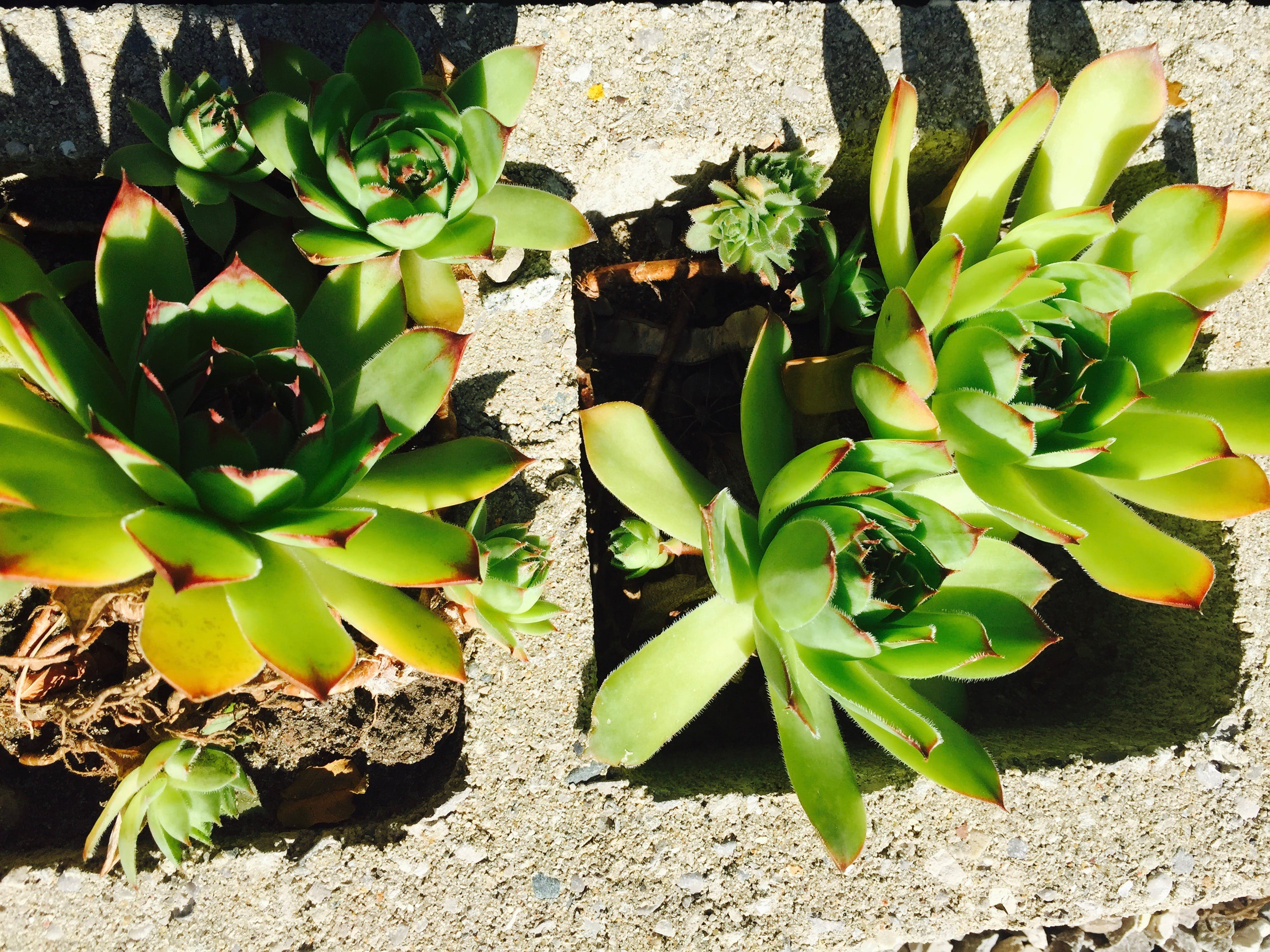 Succulent garden by parking area.